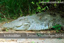 Thema Krokodillen