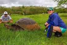 Zelvy / Zelvy, tortoise