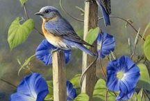 vogel plaatjes / vogels
