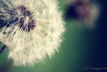 It's the little things <3 / by Erin Ebert
