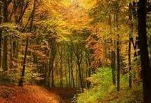 ruisseau en automne
