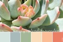 Colors + Palettes
