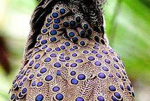 Πτηνά και είδη πτηνών