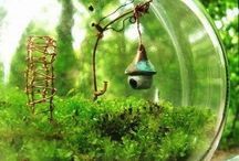 Little Fairy Gardens / by Joni Klingspor