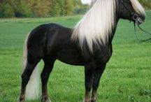 Black Forest Horses