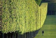 unique hedges