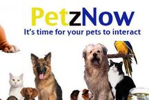 pet food online / At PetzNow you get the healthiest pet food online. We have a wide range of pet food online supplies for cats, dogs, fishes, reptiles and more. Check out http://petznow.com/ and shop for pet food online from the very comfort of your home and experience our service.