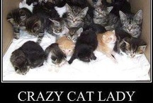 Crazy Cat Lady Starter Kits