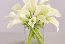 Flores e arranjos