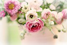 Flowers, plants, gardens