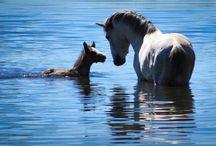 wild horses and horses