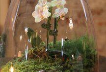 Fanusta  çiçek