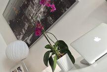 Home / Decor, furniture, inspo