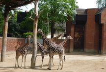 zvířata / zvířata ze zoo