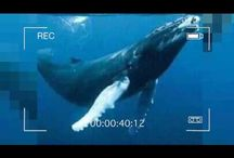 La Rosa de Guadalupe desata burlas en redes con 'La ballena azul'