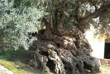 plants trees foliage