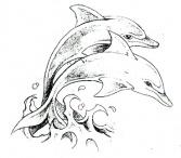 Delphin-tattoo