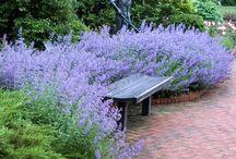 Front sun garden