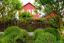 Seattle Gardens / The diversity of garden styles in Seattle, Washington.