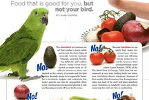 Parrot health