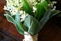 Flowers 1 / #flower, #flowers, #kukka, #kukat, #blossom