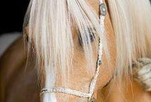 Palomino horses OMG so CUTE !!