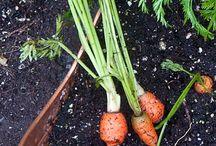 Plants/Veggies / Containers