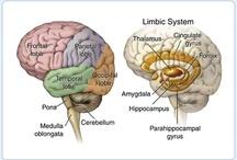 anat / anatomia