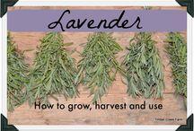 Herb garden usage