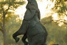 Elephants / by Bridget A