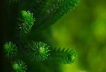 GREEN! / by Linda McHardy