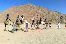 Sharm El Sheikh Camel Ride excursion