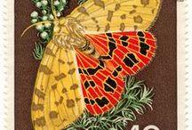 znaczki motyle