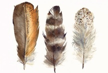 Plumes - Feathers