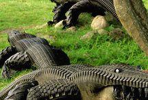 Alligaattoreita autonrenkaista