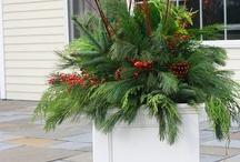 Planter Ideas / by Tina Logsdon