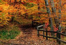 Fall in Bloomington, Indiana / Fall in Bloomington, Indiana
