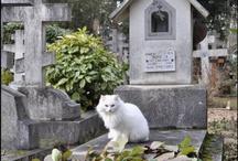begraafplaatskatten