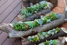 succulents in Pa.