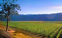 Okanagan Wineries