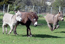 Donkeys! / by Karen Kiley