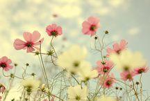 Blomster og borddekorasjon