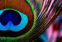 Peacock Love / An expression of my peacock obsession. / by Alisha Marie