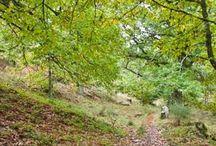 AUTUMN / Trekking tracks in autumn Salamanca