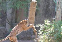 Zoo stuff