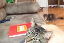 Jealous Pets / 25 Silly Animals Who Might Be Just A Liiiiittle Bit Jealous Right Now