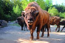 Incontri bestiali 2 / Al Parco Natura Viva di Bussolengo, Verona