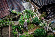 Giardinaggio che amo / gardening