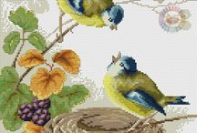 obrazy vtáci