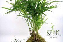 strings planta ou kokedamA